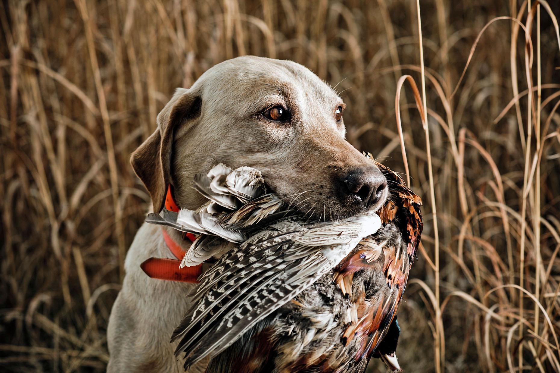 Field & Stream 2013 South Dakota upland bird photo shoot